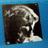 """PATTI SHELTON   - """"Touches You"""" -  Gold Sound Records 1980"""